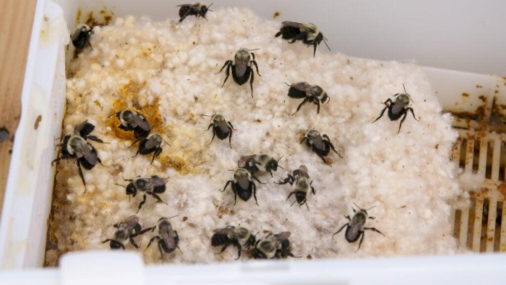 bumble bee hive