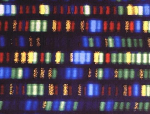 Uzbekistan Will Test Kids' Genes To Find Future Olympians
