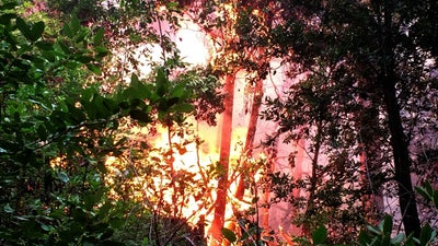 Wildfires Are Causing Plants To Migrate North