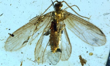 Now paleontologists know what colors graced these 200-million-year-old butterfly wings