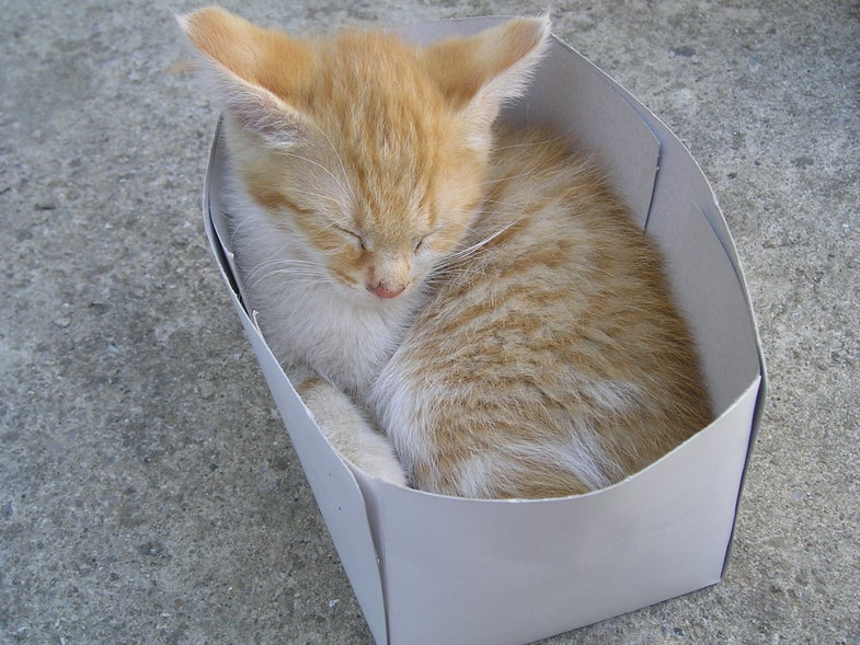 The Joy of Cardboard