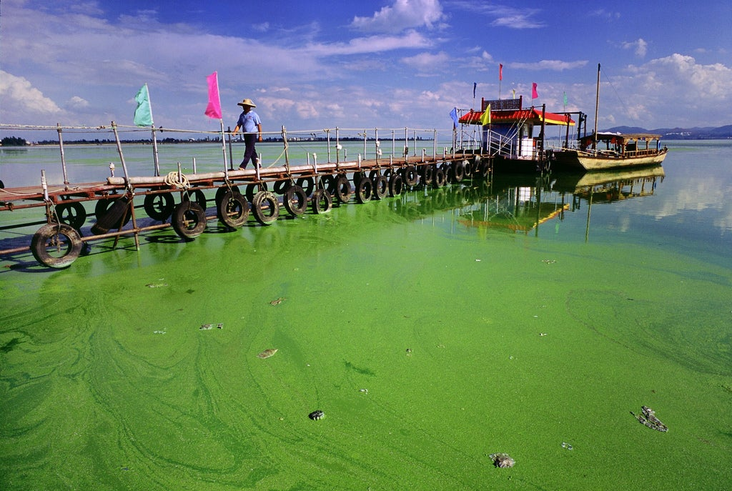 60-Ship Flotilla Dispatched to Ward Off Massive Algae Bloom on Chinese Coast