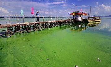 60-Ship Flotilla Dispatched to Ward Off Massive Algae Bloom on Chinese Coast