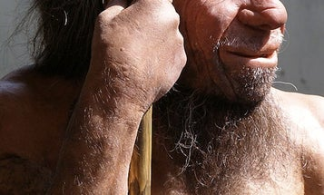 What Modern Humans Can Learn From The Neanderthals' Extinction