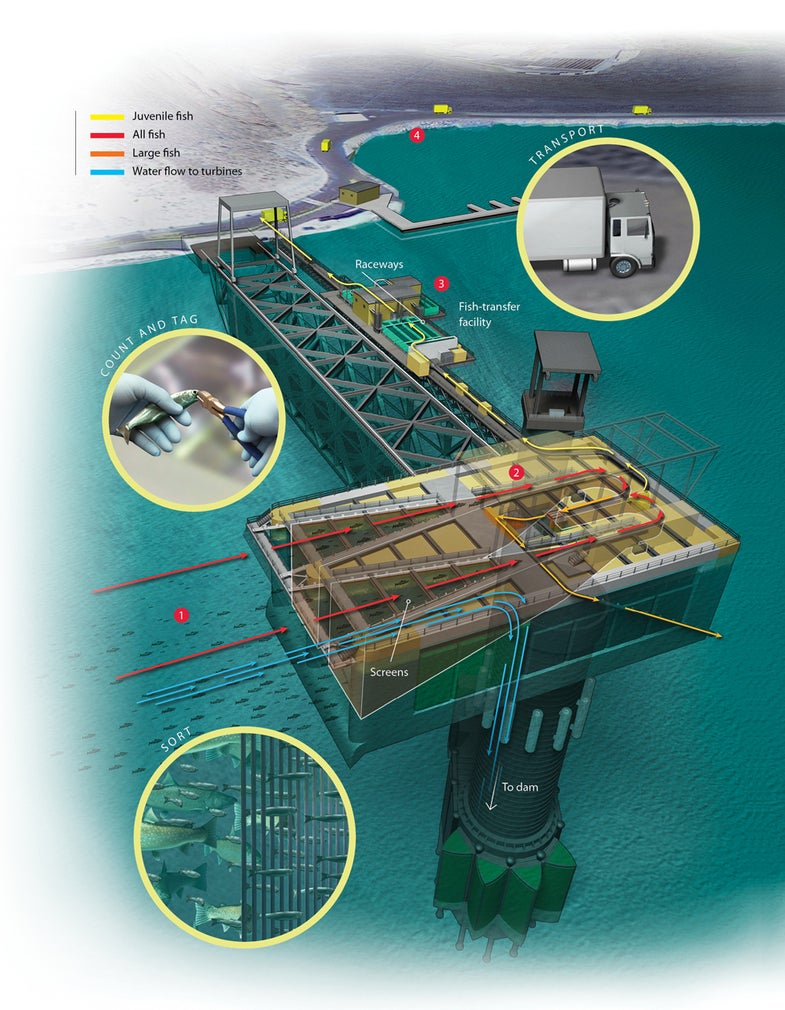 how-it-works illustration of a Salmon Transporter