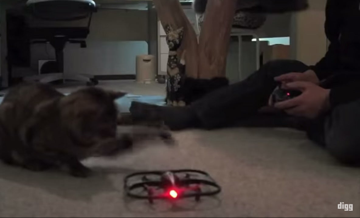 Video: Why Do All These Animals Hate Drones?