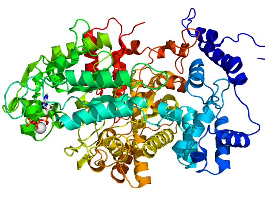 Princeton Researchers Construct Wholly Artificial Proteins That Can Sustain Cell Life