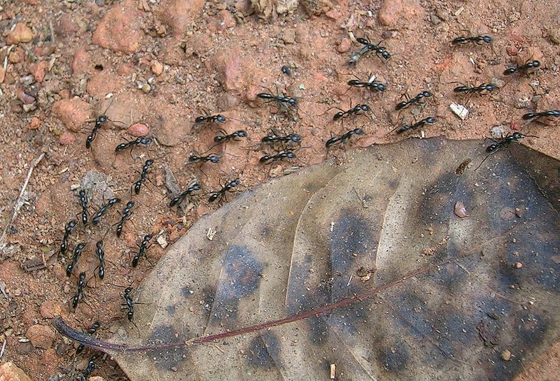 Ants, Space, and Your Classroom?