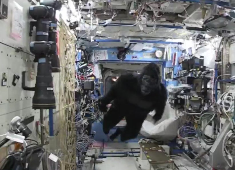 Why Is A Gorilla Aboard The Space Station?