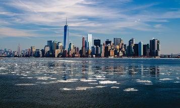 10 Of New York City's Most Surprising Animals
