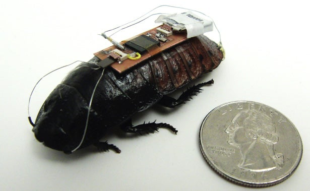 Video: Cyborg Cockroach Scurries Along a Precise, Curved Path