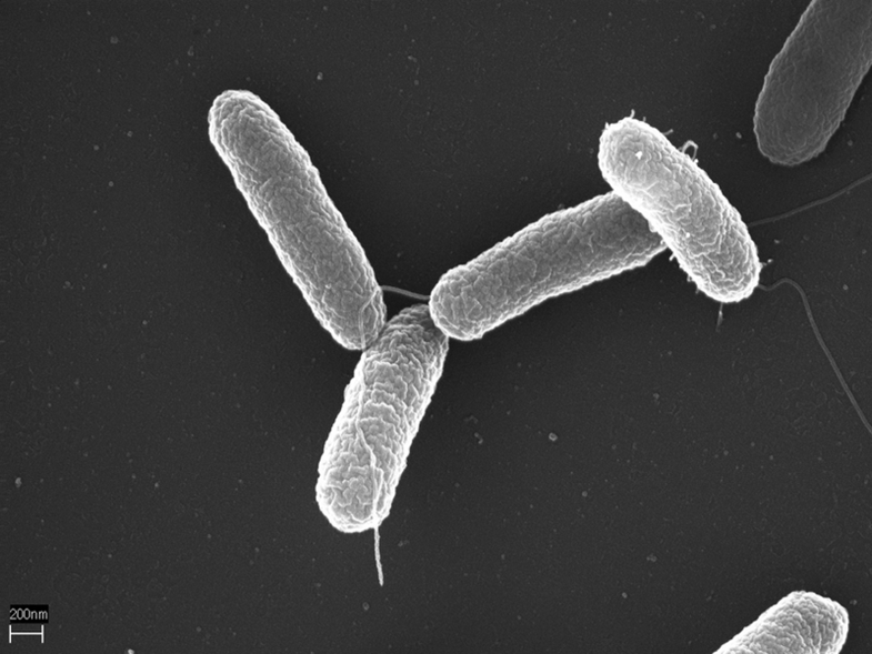 Weaponized Salmonella Could Be Used to Fight Cancer in the Gut