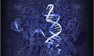 Human patient treated with CRISPR gene editing for the first time
