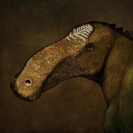 """""""Probrachylophosaurus"""
