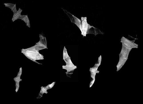 How Bat Sonar Could Improve Human Cameras