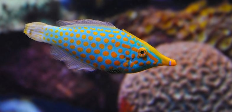 Fish Hide From Predators By Smelling Like Coral