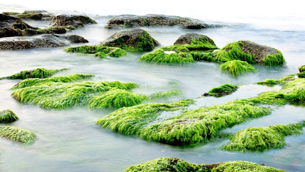 Sea plants cover rocks.