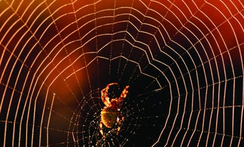 FYI: Why Don't Spiders Get Trapped In Their Own Webs?
