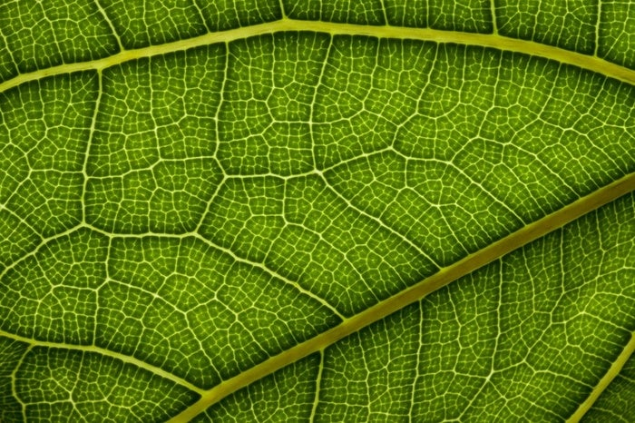 Making Artificial Leaves to Produce Hydrogen