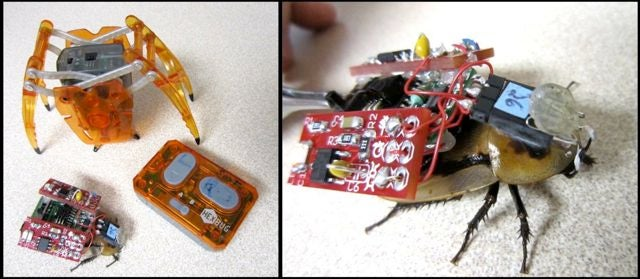 Video: DIY Cyborgify-Your-Own Cockroach Kit Lets You Steer Real Live Bugs Around
