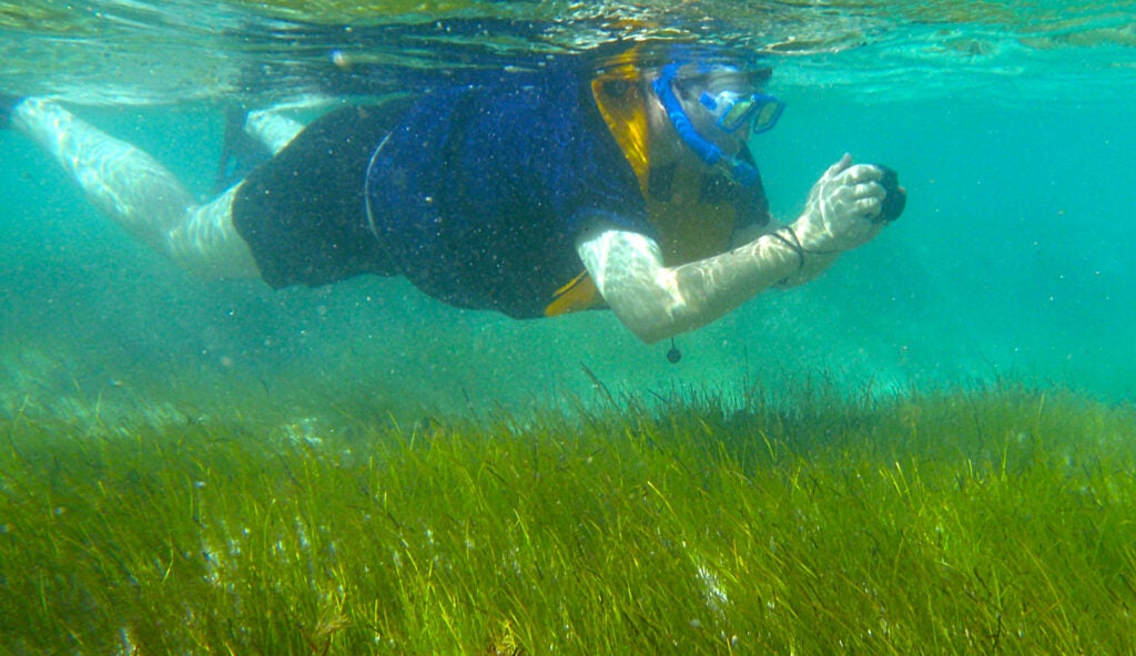 a person swimming through seagrass wearing snorkel gear