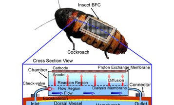 Now In Japan: Giant Cyborg Cockroaches