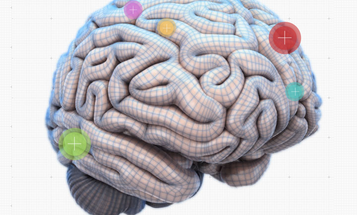 An Interactive Map Of The Brain