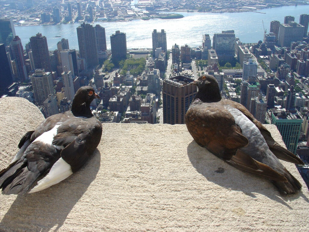 pigeons sit on a roof