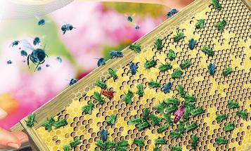 How It Works: Honeybee Society