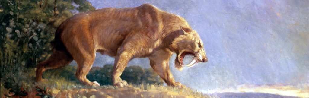 A sabre-toothed cat