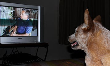 Can Dogs Watch TV?