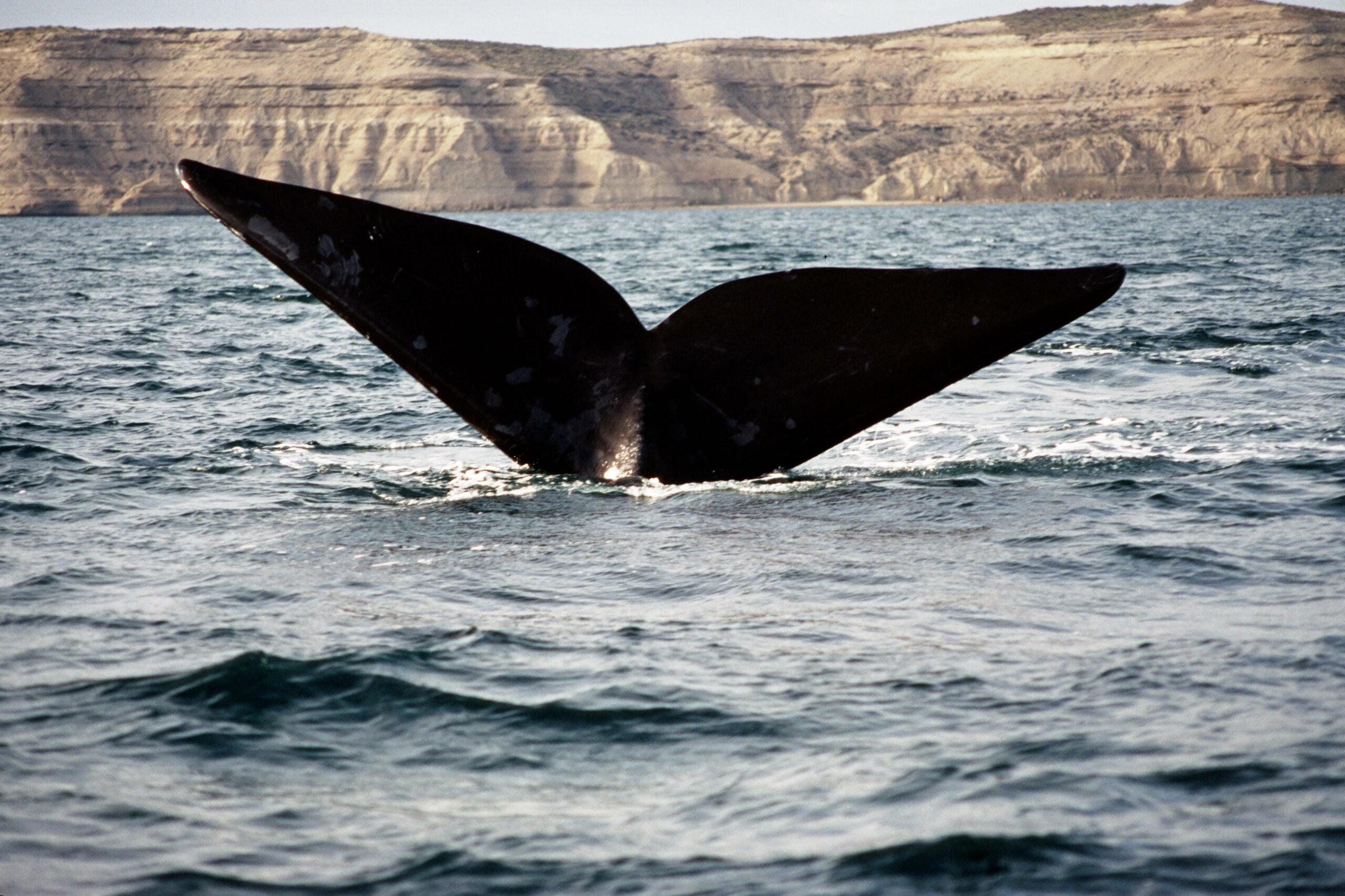 Odd Sound In Antarctica May Be From New Whale Species