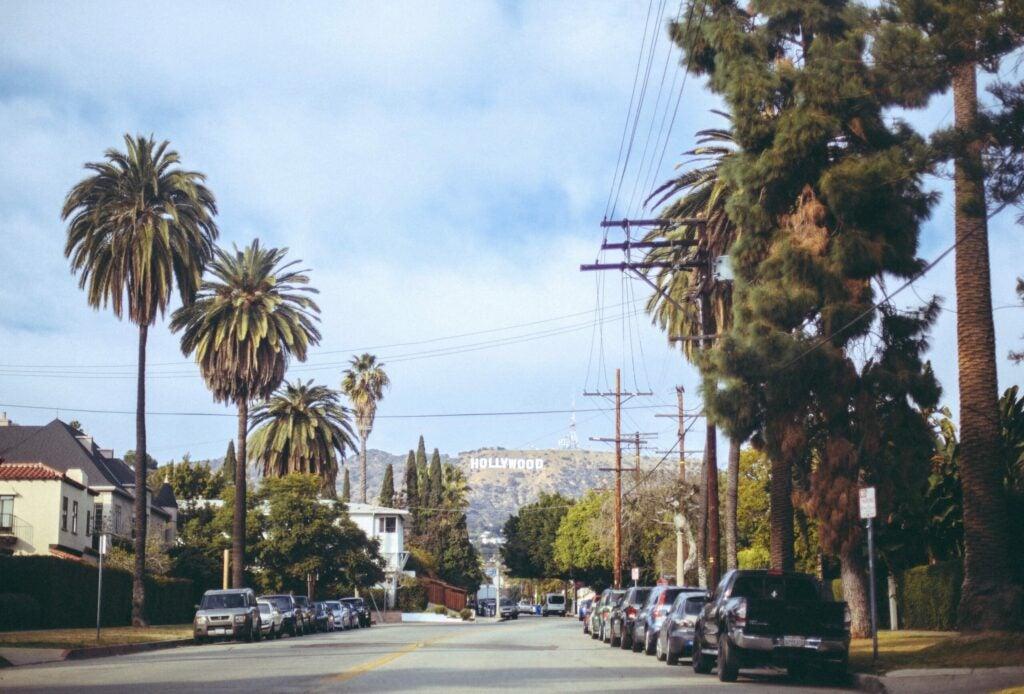 Trees in Los Angeles