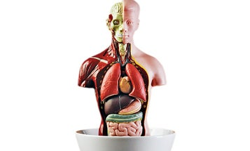 If I Ate Lab-Grown Human Tissue or Organs, Would I Be Considered a Cannibal?