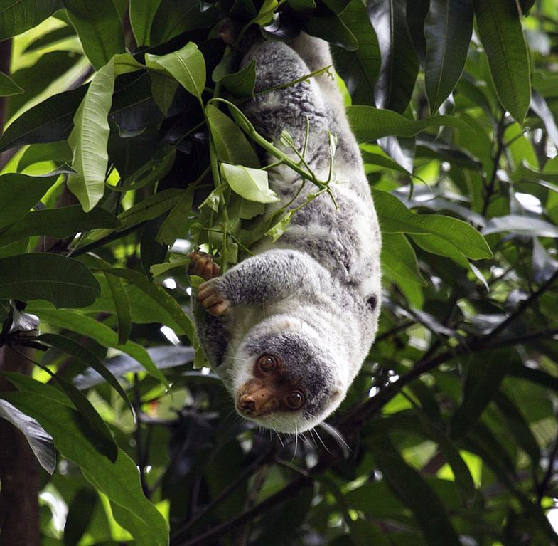 Mystery Animal Contest: Who Is This Upside-Down Tree-Dweller?
