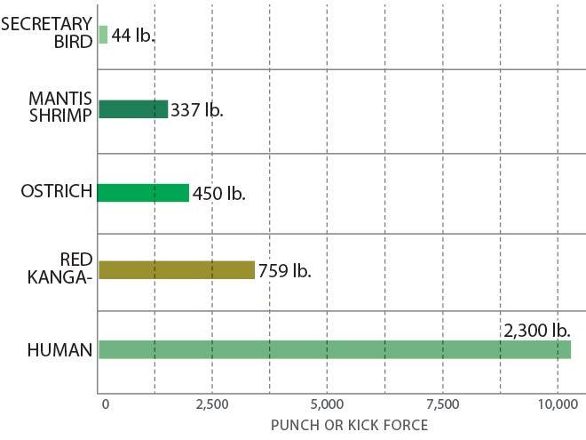 Punches and kicks