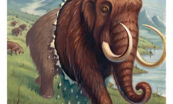 Scientists Can Now Revive The Wooly Mammoth
