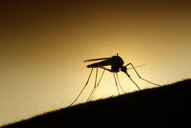 Scientists may have just made a malaria vaccine breakthrough