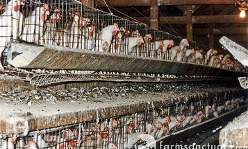 Factory Farming and its Dire Consequences