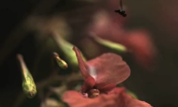 Video: How Flies Somersault to Safety Just Before You Swat Them