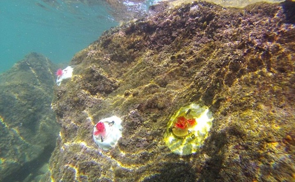 Artificial algae could help save our oceans
