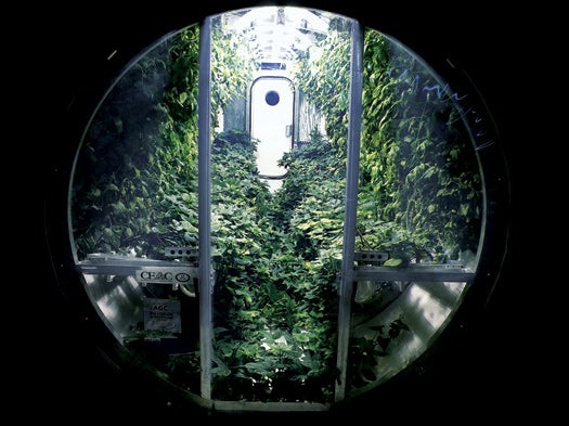 A New Greenhouse Could Provide Food and Oxygen To A Lunar Colony