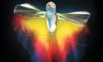 How Darpa's Tiny Robotic Hummingbird Hovers and Films
