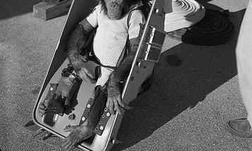 Former Soviet 'Monkey Nursery' Now Wants To Send An Ape To Mars