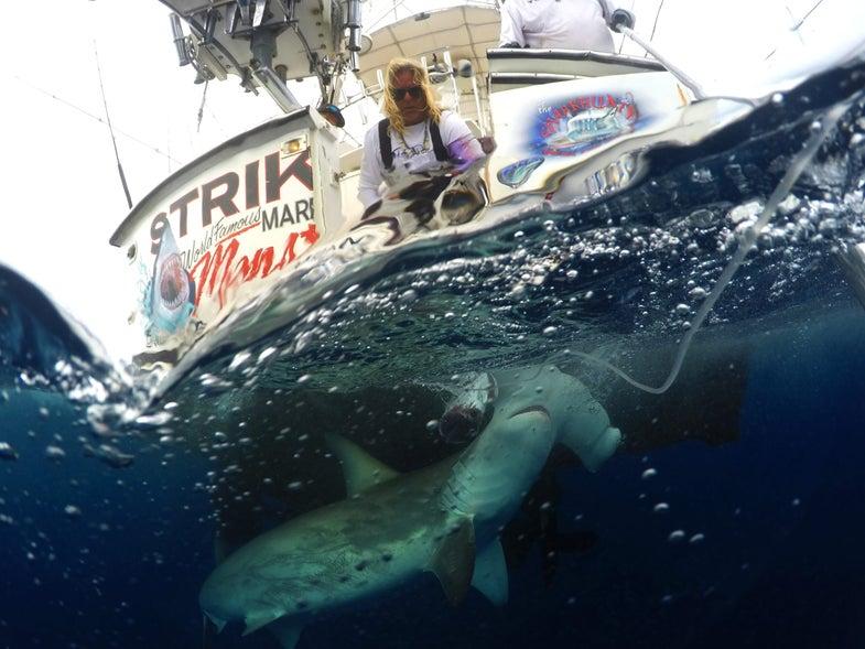 Mark the Shark Quartiano