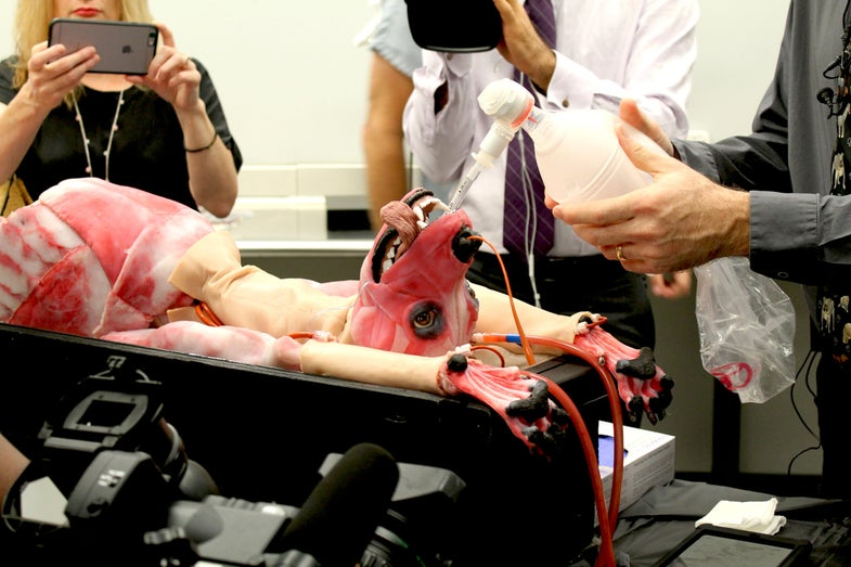 Biotech Company Unveils A Synthetic Dog For Veterinary Students