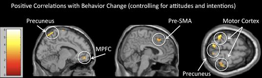 According to New Study, fMRI Brain Scans May Predict Your Behavior Better Than You Can