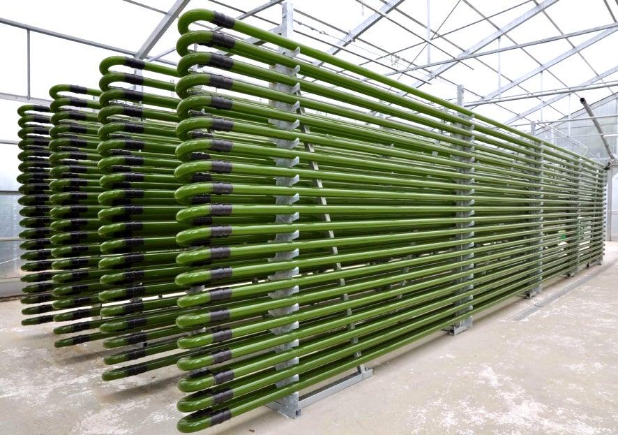 algae bioreactors