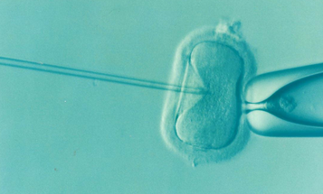 It looks like we're one step closer to creating genetically modified humans in a lab