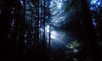 Natural UV Rays Destroy Ozone